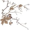竹子荷花植物0052,竹子荷花植物,节日喜庆,葡萄藤
