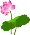 竹子荷花植物0060,竹子荷花植物,节日喜庆,粉红荷花