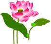 竹子荷花植物0061,竹子荷花植物,节日喜庆,