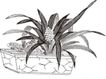 竹子荷花植物0072,竹子荷花植物,节日喜庆,