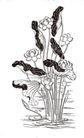 竹子荷花植物0074,竹子荷花植物,节日喜庆,