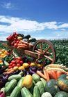 丰收大地0173,丰收大地,农业,青蔬 瓜果 果蔬基地