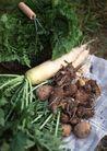 丰收大地0180,丰收大地,农业,芋头 青叶 菜篮