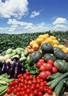 丰收大地0186,丰收大地,农业,西红柿 南瓜
