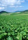 丰收大地0188,丰收大地,农业,菜地 青菜
