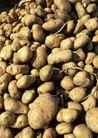 丰收大地0200,丰收大地,农业,一堆土豆
