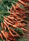 丰收大地0210,丰收大地,农业,红萝卜