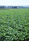 丰收大地0211,丰收大地,农业,种植基地 农业基地
