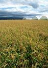 丰收大地0212,丰收大地,农业,水稻 早季粮食