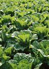 丰收大地0218,丰收大地,农业,青蔬 菜叶