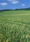 丰收大地0221,丰收大地,农业,稻谷 稻田