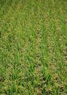 丰收大地0222,丰收大地,农业,庄稼 农作物