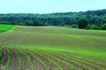 丰收田地0021,丰收田地,农业,