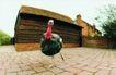 农场记趣0022,农场记趣,农业,