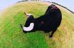 农场记趣0023,农场记趣,农业,