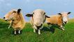 农场记趣0027,农场记趣,农业,