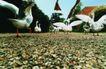 农场记趣0035,农场记趣,农业,