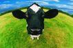 农场记趣0040,农场记趣,农业,