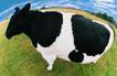 农场记趣0042,农场记趣,农业,