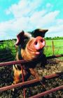 农场记趣0047,农场记趣,农业,