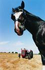 农场记趣0052,农场记趣,农业,