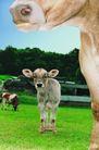 农场记趣0066,农场记趣,农业,