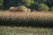 农村经济0096,农村经济,农业,房屋 乡村