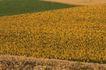 农村经济0098,农村经济,农业,