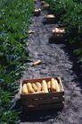 农村经济0142,农村经济,农业,