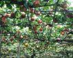 收获季节0045,收获季节,农业,