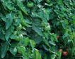 收获季节0048,收获季节,农业,