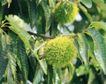 收获季节0049,收获季节,农业,