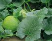 收获季节0054,收获季节,农业,