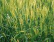 收获季节0066,收获季节,农业,