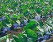 收获季节0069,收获季节,农业,