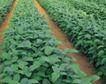 收获季节0070,收获季节,农业,