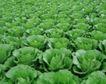 收获季节0074,收获季节,农业,
