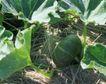 收获季节0080,收获季节,农业,