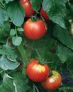 收获季节0090,收获季节,农业,