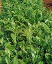 收获季节0098,收获季节,农业,农作物 种植 田园