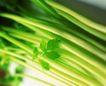 日常蔬菜0066,日常蔬菜,农业,