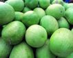 日常蔬菜0081,日常蔬菜,农业,