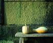 日常蔬菜0084,日常蔬菜,农业,