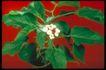 植物世界0044,植物世界,农业,