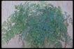 植物世界0045,植物世界,农业,