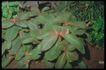 植物世界0046,植物世界,农业,