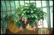 植物世界0047,植物世界,农业,