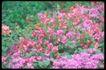 植物世界0049,植物世界,农业,