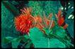 植物世界0053,植物世界,农业,