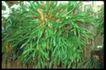 植物世界0054,植物世界,农业,